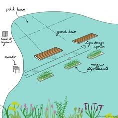 Une ligne de natation végétalisée