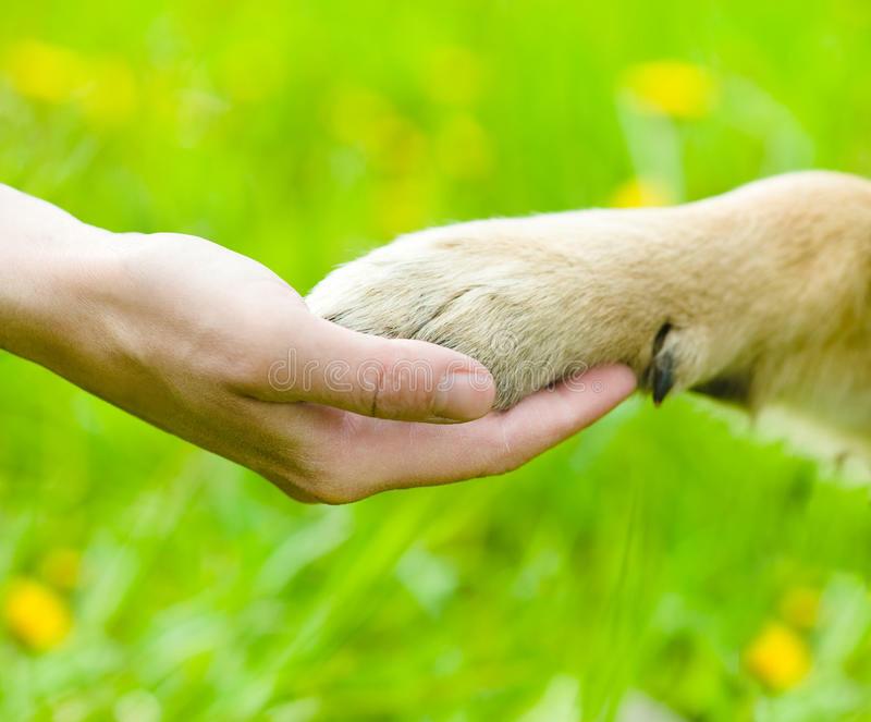 """Points d'attache accueillants et sécurisés pour les chiens en ville """"Caban'à toutou"""" !"""
