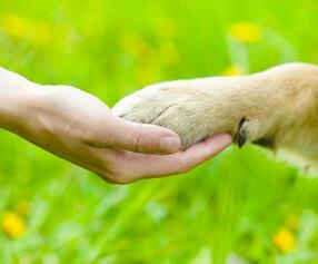 amitié-entre-l-humain-et-le-chien-secousse-de-la-main-et-de-la-patte-42517967.jpg