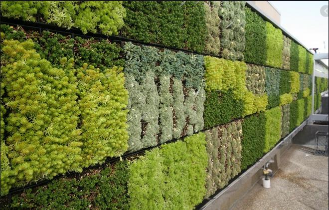 Création d'un mur végétal antibruit place Giffard Langevin