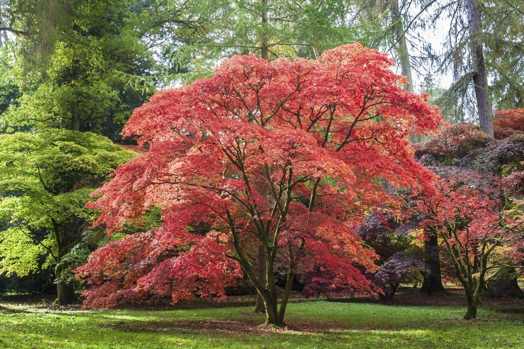 Planter autrement les arbres sur Angers