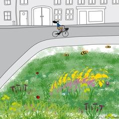 2 / Des prairies fleuries pour protéger les insectes pollinisateurs