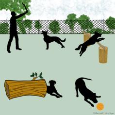21/ Création d'aires d'ébat pour chiens dans un parc angevin