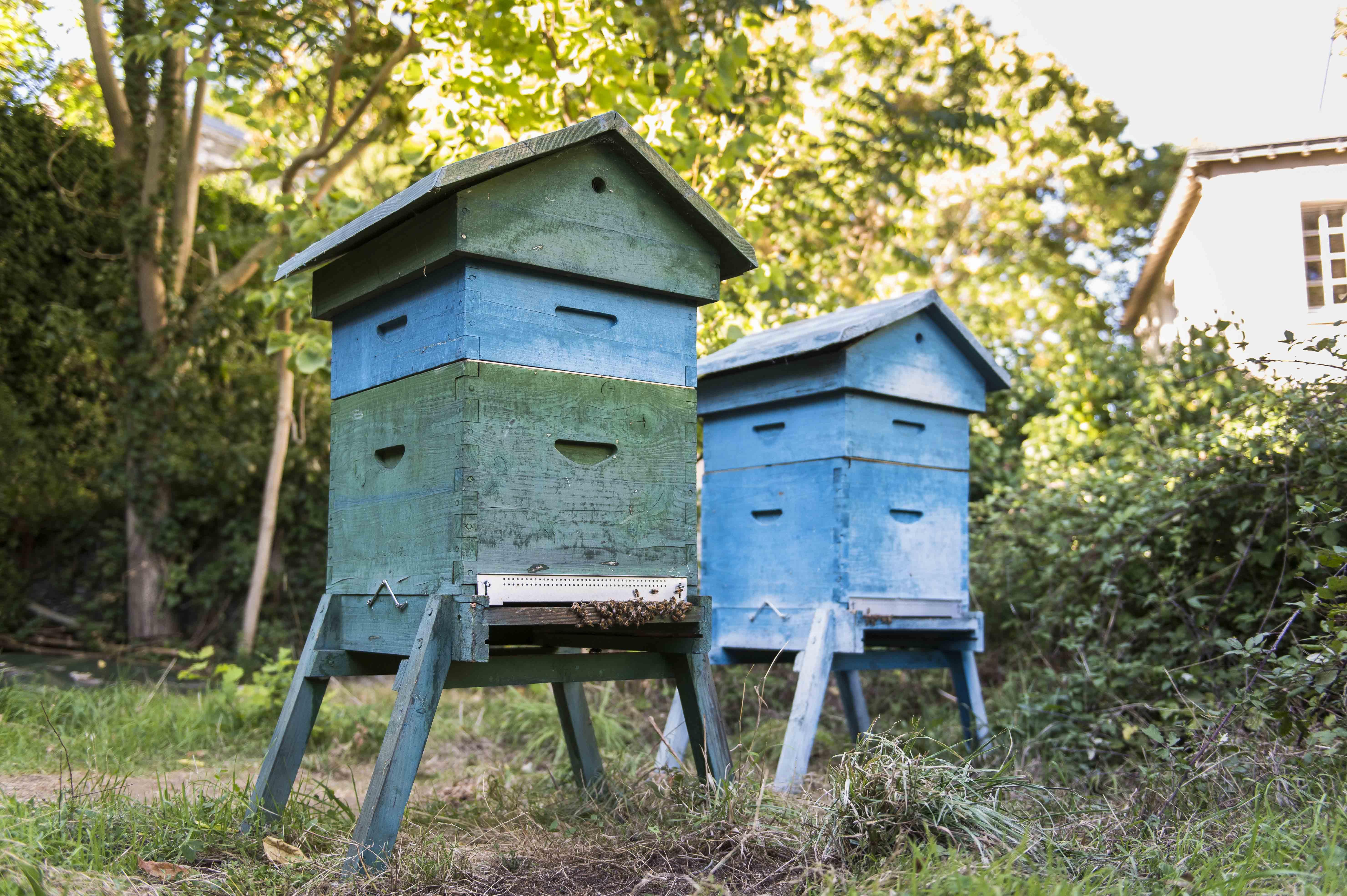 Des ruches dans ma ville