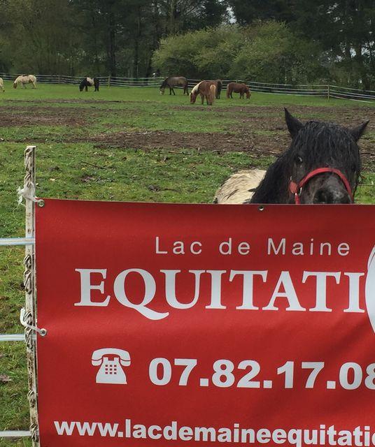 avatar Association Lac de Maine Equitation